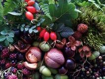 Cuenco del otoño Foto de archivo