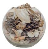 Cuenco transparente, florero llenado de las cáscaras del mar y conos del pino, fondo aislado, blanco Foto de archivo libre de regalías