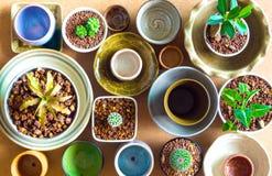 Cuencos de cerámica preparados para utilizar para el pote del houseplant Imagen de archivo