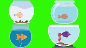 Cuencos de los pescados de la historieta con los pescados en una pantalla verde stock de ilustración