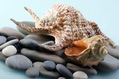 Cuencos del mar Imagen de archivo libre de regalías