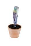 Cuenta del franco en crisol de flor. Tipos de interés, crecimiento Imagenes de archivo