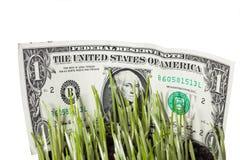 Cuentas de dólar escondidas en hierba verde Imagen de archivo libre de regalías