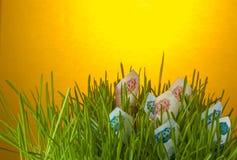 Cuentas de la rublo en hierba verde Foto de archivo libre de regalías