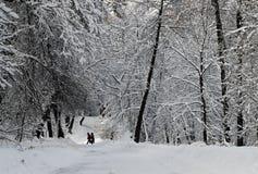 Cuento de hadas del invierno Imagen de archivo libre de regalías
