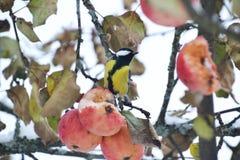 Cuento de hadas del invierno - tit fotos de archivo