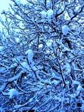 Cuento de hadas de la nuez azul del invierno fotografía de archivo libre de regalías
