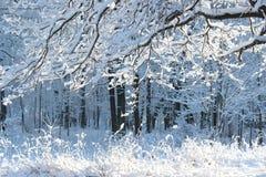 Cuento de hadas ruso del invierno Fotografía de archivo