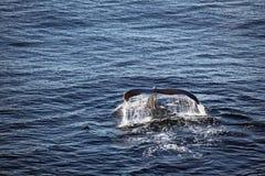 Cuento de la ballena Foto de archivo libre de regalías
