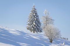 Cuento del invierno Imagenes de archivo