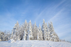 Cuento del invierno Foto de archivo libre de regalías