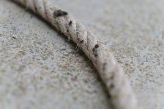 Cuerda blanca en el muelle Fotos de archivo