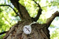 Cuerda de extensión en un árbol para la energía renovable Imagenes de archivo