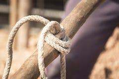 Cuerda de la cuerda Imagenes de archivo