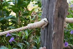 Cuerda de madera de la cerca y del nudo Fotos de archivo