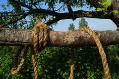 cuerda en una rama de árbol Fotografía de archivo