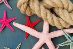 Cuerda marina con las estrellas de mar Imagen de archivo