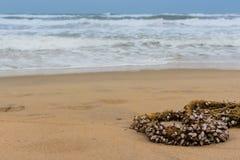 Cuerda y crustáceos Imágenes de archivo libres de regalías