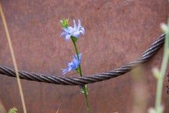 Cuerda y flor fotografía de archivo libre de regalías