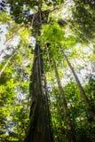 Cuerdas del toldo en la selva del Amazonas Imágenes de archivo libres de regalías