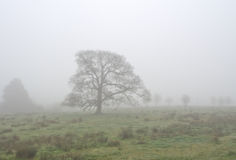 Cuerden valley in fog Stock Photo