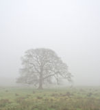Cuerden valley in fog Royalty Free Stock Photo