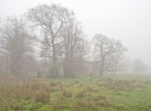 Cuerden valley in fog Royalty Free Stock Image