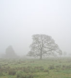 Cuerden valley in fog Stock Photography