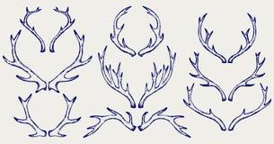 Cuernos de los ciervos Imagenes de archivo