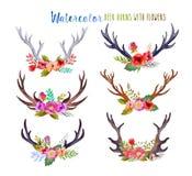 Cuernos de los ciervos de la acuarela Imagen de archivo libre de regalías