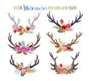 Cuernos de los ciervos de la acuarela del vector Foto de archivo