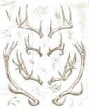 Cuernos de los ciervos del dibujo de la mano imagen de archivo libre de regalías