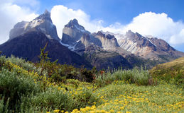 Cuernos Del Paineand meadow Stock Images