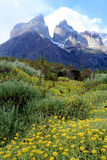 Cuernos Del Paineand meadow. Stunning Cuernos del Paine in southern Chile royalty free stock photography