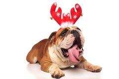 Cuernos del reno del dogo inglés del jadeo que llevan para la Navidad Fotos de archivo