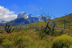 Cuernos Paine Grande, Torres Del Paine National Park, Patagonia, Chile. Southamerica stock photos