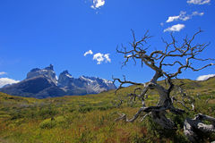 Cuernos Paine Grande, Torres Del Paine National Park, Patagonia, Chile. Southamerica royalty free stock photo