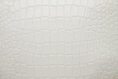 Cuero artificial blanco del cocodrilo Imagen de archivo