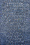Cuero azul del cocodrilo Imágenes de archivo libres de regalías