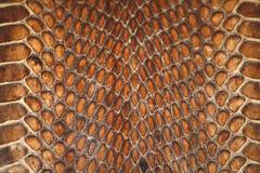 Cuero de la serpiente Fotos de archivo