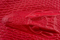 Cuero rojo del cocodrilo con la cabeza del cocodrilo Fotografía de archivo libre de regalías