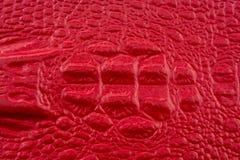 Cuero rojo del cocodrilo con la cabeza del cocodrilo Imágenes de archivo libres de regalías