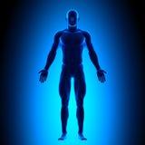 Cuerpo completo - Front View - concepto azul Imagen de archivo libre de regalías