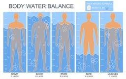 Cuerpo de la historieta y cartel de la tarjeta de Infographics de la carta del agua Vector stock de ilustración