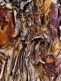 Cuerpo del árbol de pino viejo imagen de archivo