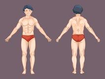 Cuerpo del hombre en actitud del frente y de la parte posterior Vector Fotos de archivo