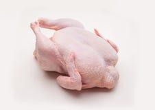 Cuerpo del pollo Imagenes de archivo