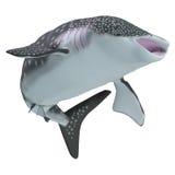 Cuerpo del tiburón de ballena Fotografía de archivo libre de regalías