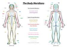 Cuerpo femenino de sistema de la carta meridiana de la descripción ilustración del vector
