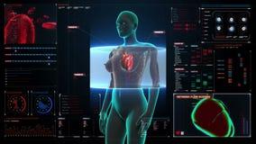 Cuerpo femenino delantero de enfoque y corazón de exploración Sistema cardiovascular humano en tablero de instrumentos del indica ilustración del vector